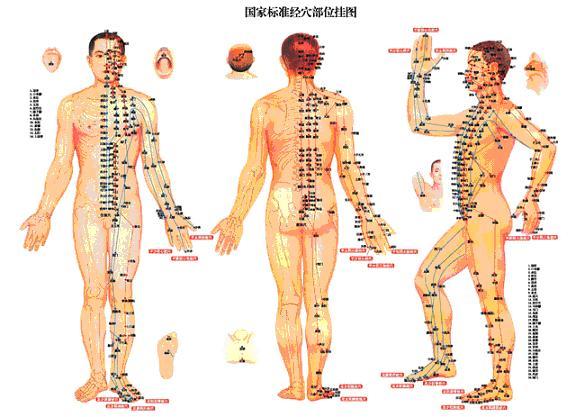 Acupuncture Meridians